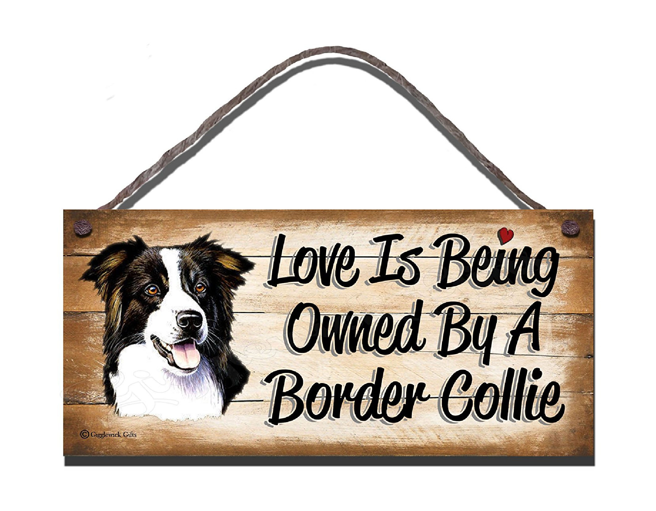 BORDER COLLIE SD2